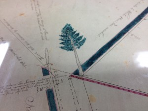 1850 Survey Plat Tree
